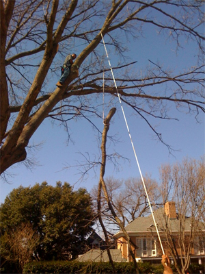 tree trimming plano texas